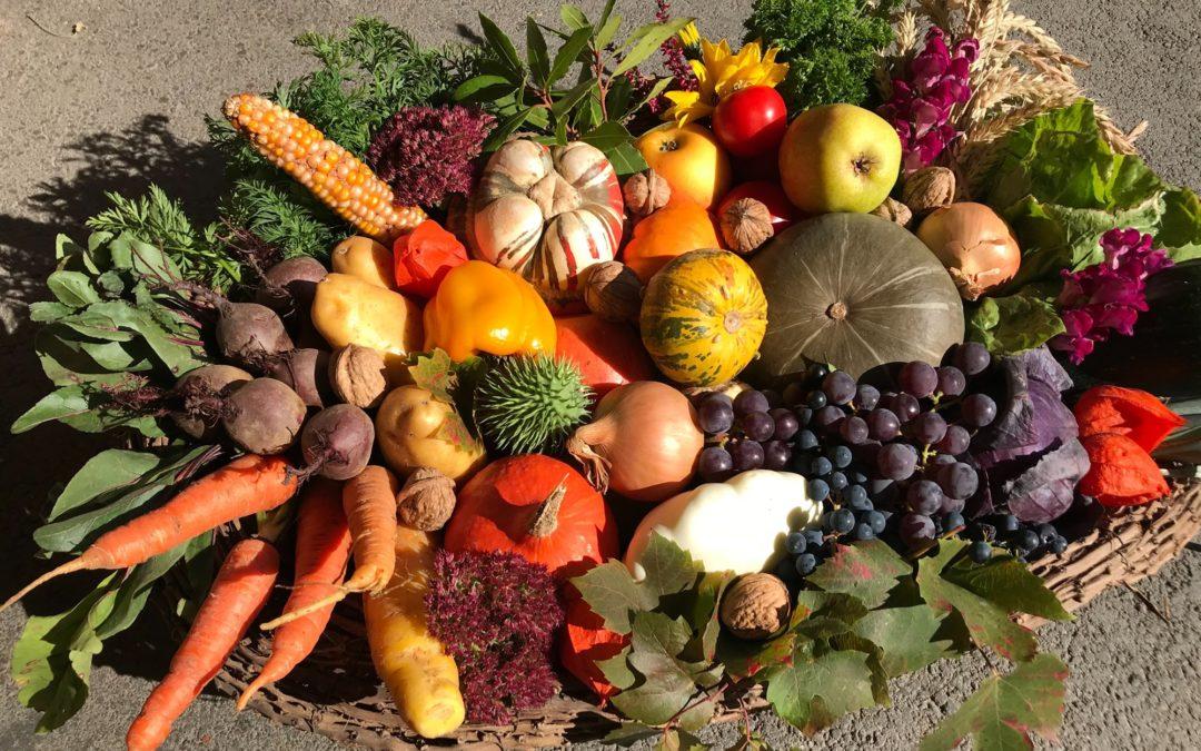 """""""An dem besonderen Fest Erntedank sollten wir uns ganz besonders bewusst machen wie wertvoll unser heimisches Gemüse, Obst und Getreide ist""""."""