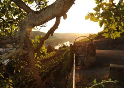 Blick von Burg Hornberg_TG Odenwald
